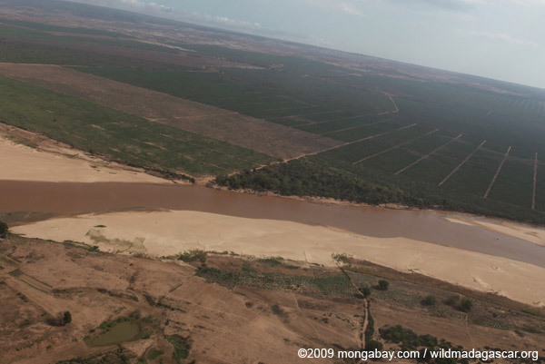 Aerial view of the Mandrare River, gallery forest of Berenty, and sisal