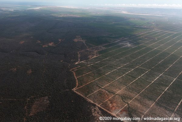 Aerial view of spiny forest of Andohahela and sisal
