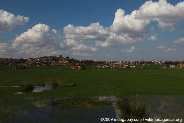 Tana rice fields