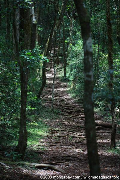 Trail in Montagne d'Ambre