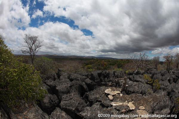 Limestone tsingy of Ankarana