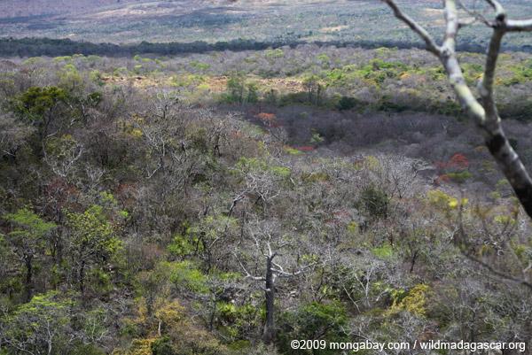 Dry forest of Ankarana