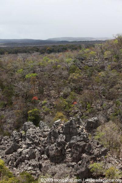 Trail through the tsingy in Ankarana
