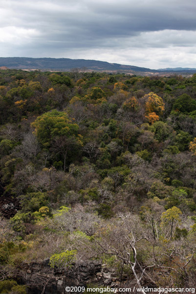 Deciduous forest of Ankarana
