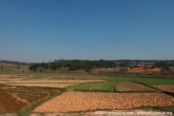Rice fields south of Tana along RN7