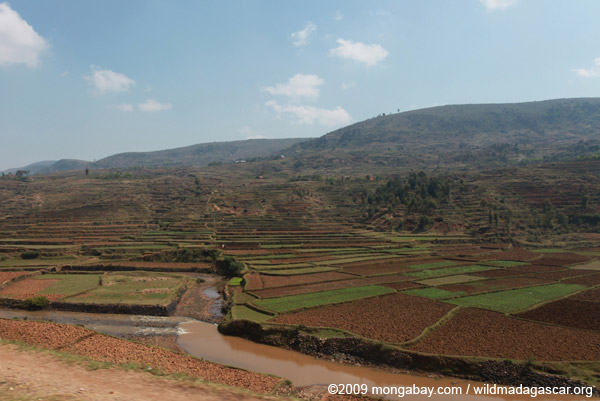 Rice paddies along RN7