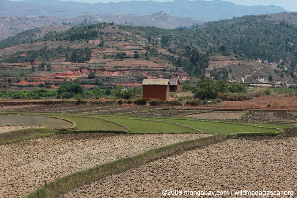 Villages and rice fields along RN7