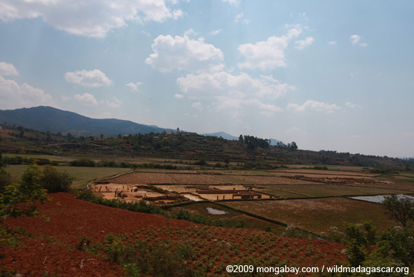 Brick-making in a rice field