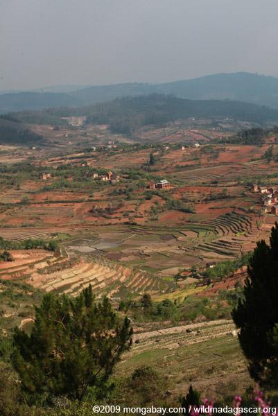 Terraced rice paddies Madagascar's Central Highlands