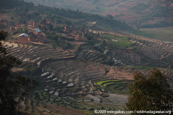 Village and terraced rice paddies in Madagascar's Central Plateau
