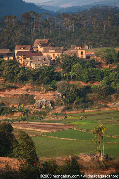 Village and rice fields in Madagascar's Central Plateau