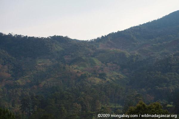 Deforestation near Ranomafana