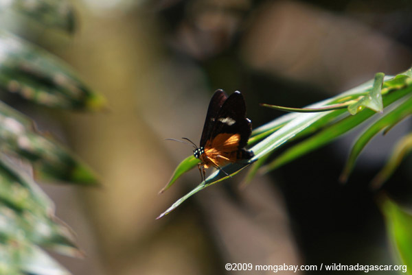 Orange, yellow, and black butterfly