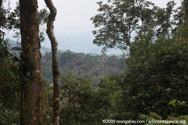 Ranomafana rainforest seen from a lookout on the Valohoaka or Vatoharanana trail