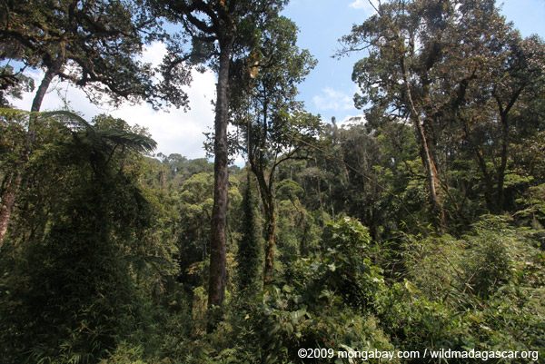 Ranomafana rainforest