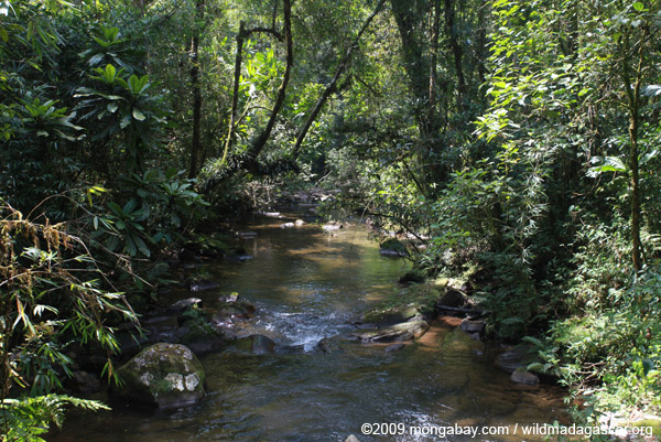 Ranomafana rainforest creek