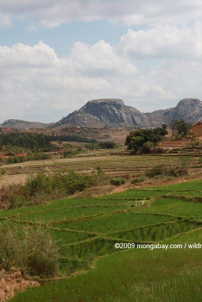 Rice fields near Fianarantsoa