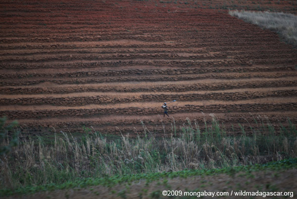 Dry terraced rice paddies