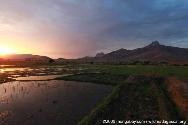 Flooded rice fields at sunset