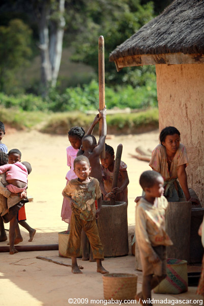 Kids grinding grain or cassava