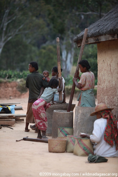 Grinding grain or cassava