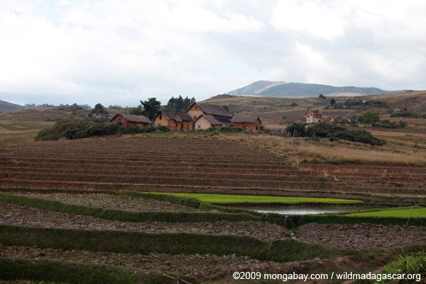 Village and rice fields in the Antanifotsy Valley