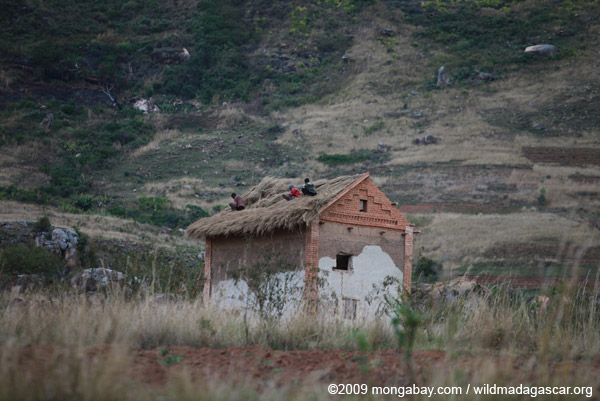 Men repairing a grass roof in the Antanifotsy Valley