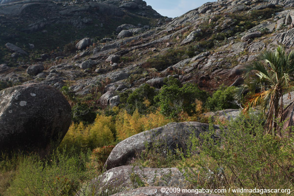 Andringitra landscape: boulders and bamboo