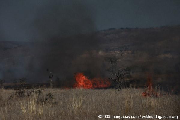 Burning savanna in Madagascar