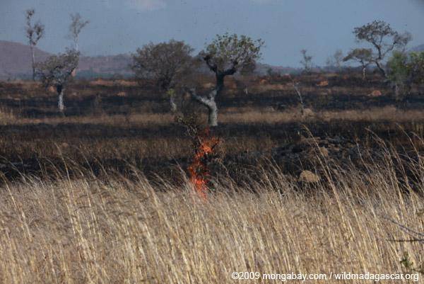 Charred grassland in Madagascar