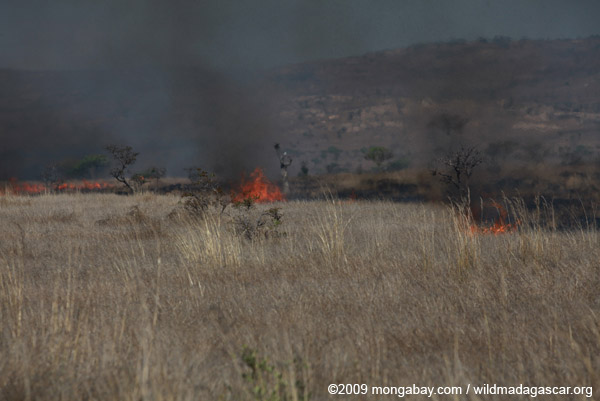 Brush fire in Madagascar