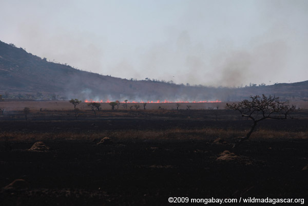 Fire moving across grassland in Madagascar
