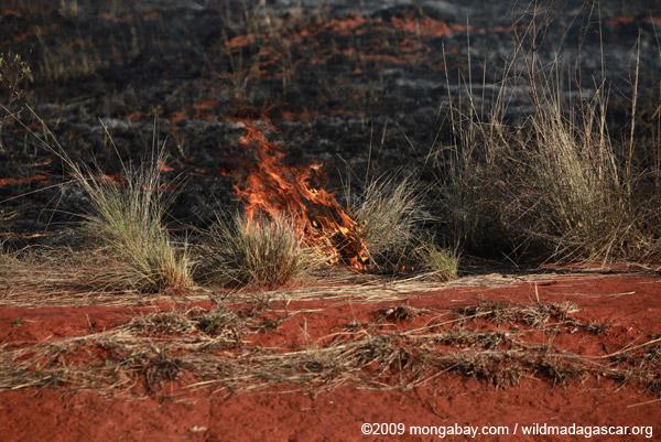 Grass fire in Madagascar