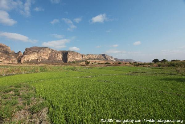 Rice paddies near Canyon des Makis and Canyon des Rats
