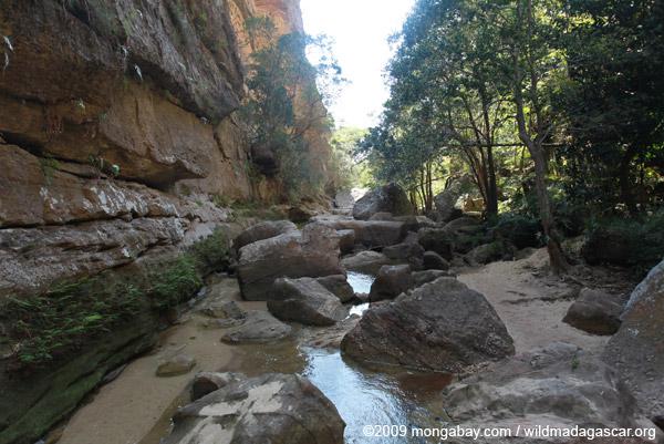 Canyon des makis