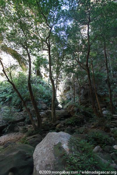 Canyon des singes
