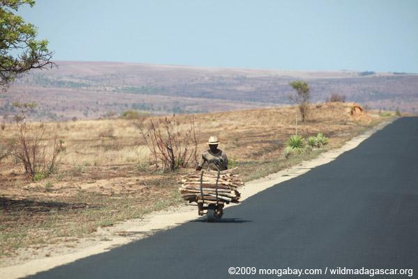 Man transporting firewood in Madagascar