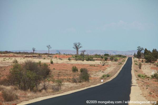 Baobabs along RN7