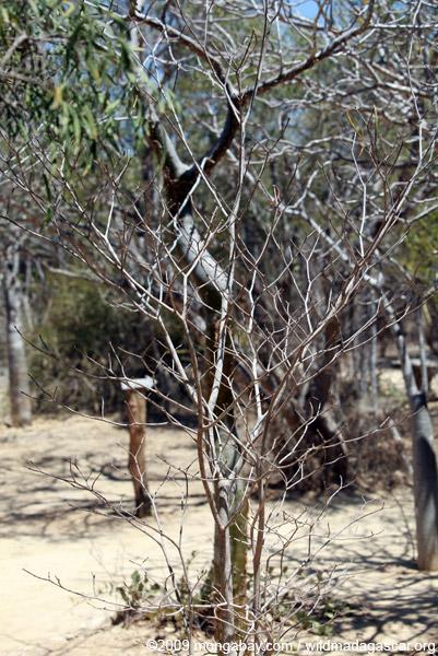 Spiny forest vegetation