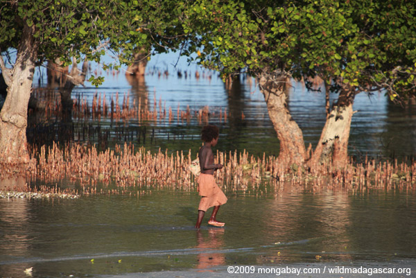 Vezo child walking near mangroves
