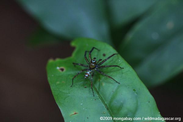 Multicolored spider