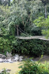 Bridge at the Danum Valley Research Center
