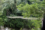 Bridge at the Danum Valley Research Center -- sabah_2563