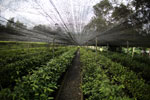 Rainforest tree nursery -- sabah_2570