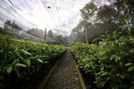 Rainforest tree nursery -- sabah_2571