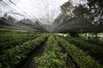 Rainforest tree nursery