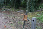 Electric fence around a palm plantation