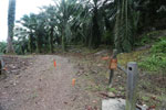 Electric fence to prevent elephants from entering an oil palm plantation