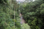 Rainforest creek -- sabah_2601
