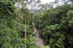 Rainforest creek -- sabah_2602